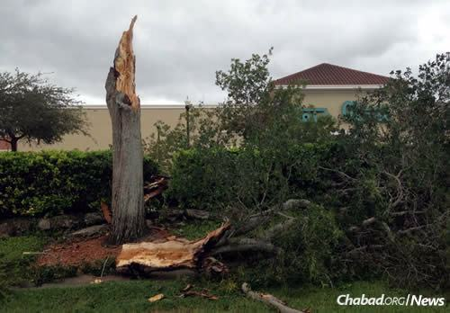 Fallen trees, like this one in Orlando, are one of the main hazards for those going home.