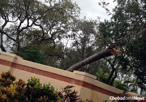 Tree trunks flew like projectiles, and debris is scattered throughout areas hit by the storm.