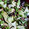 Apple-Mint Salad with Lime Vinaigrette