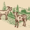 The Secret Symbolism of the Calf and Goat