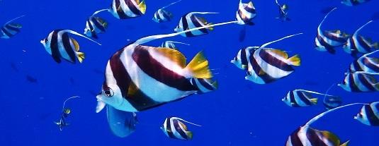fish-2733323 crop.jpg