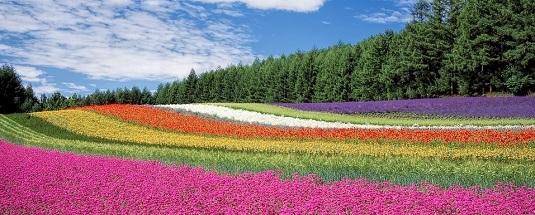 flower-field-250016_960_720 crop.jpg