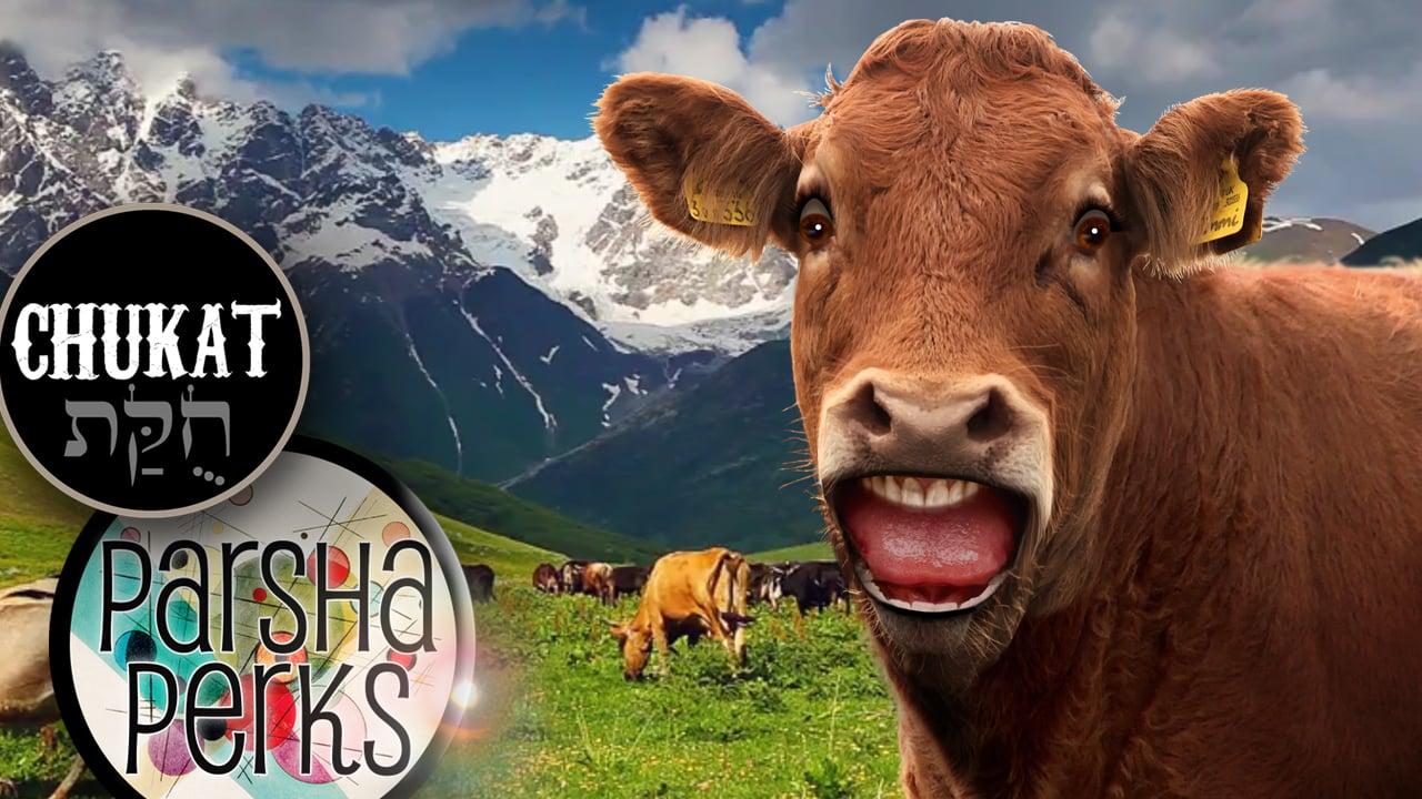 Do Skeptics Make You Have a Cow?