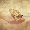 Broken Wings? We All Have Them