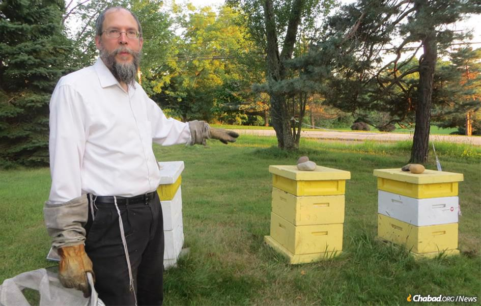 Rabbi Avraham Laber, co-director of Chabad-Lubavitch of Southern Rensselaer County in New York, explains that when the bees bring back nectar, it's deposited into cells in the hives. (Photo: Carin M. Smilk)