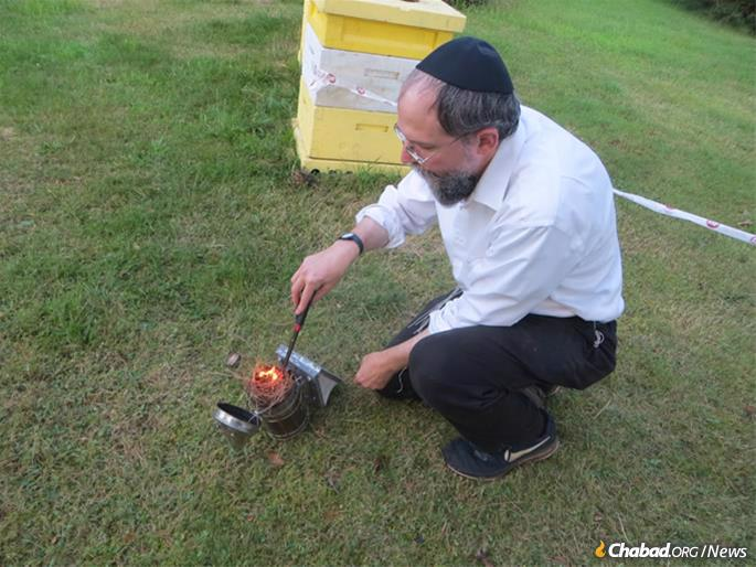 The rabbi uses smoke to calm honey bees before opening a hive. (Photo: Carin M. Smilk)