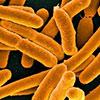 Cientistas Israelenses Criam Bactérias Comedoras de CO2