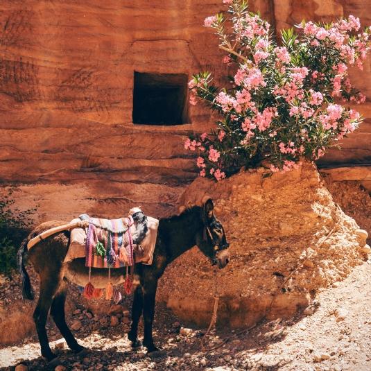 Donkey (2).jpg
