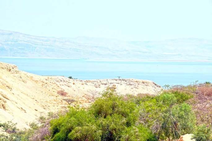 Ein Gedi é o maior Oásis de Israel. Possui nascentes, cachoeiras e riachos que fluem ao pé de falésias.