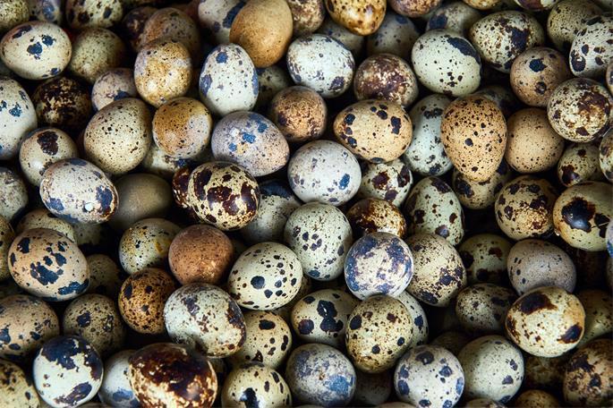 File photo of quail eggs.
