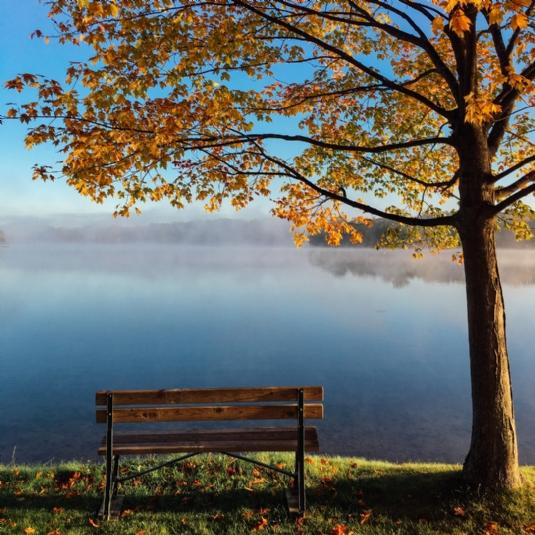 Bench under tree1.jpg