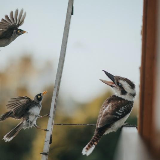 Birds tweet.jpg