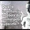 Qual a importância do abate do animal pelo judaísmo? – 10