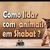 Como lidar com animais em Shabat? – 85