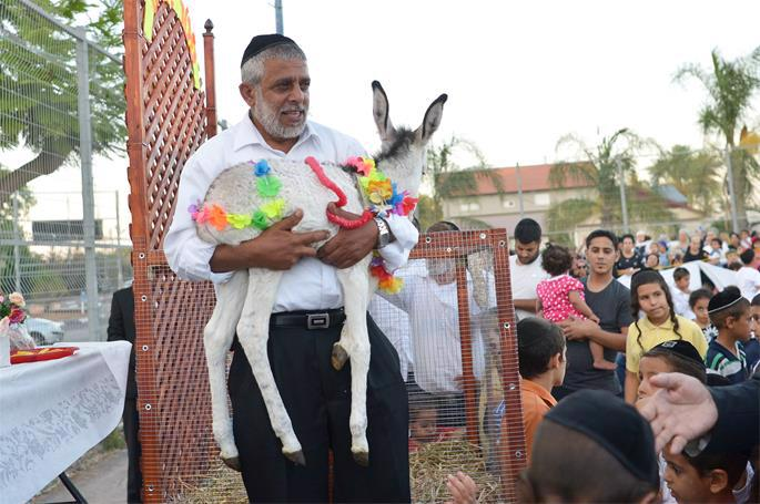 Redeeming the firstborn donkey, joyously carried out in Moshav Ahi'ezer near Lod on June 26, 2018. Photo by Yossi Zeliger/Flash90