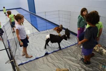 Jewish Beginnings Petting Zoo 2016