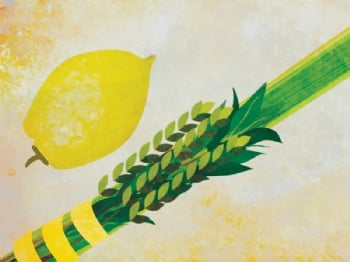 Reserve your Lulav and Etrog Today!