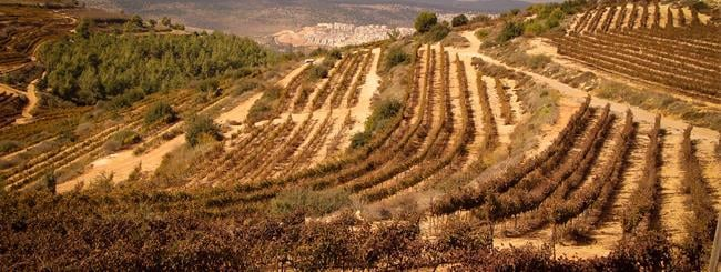 In Conversation with Chana: An Interview With an Israeli Farmer Who Keeps Shemitah