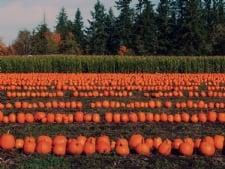 blog post 9.30 pumpkin image.jpg