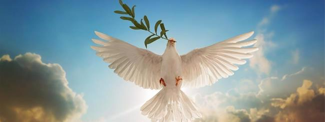Guest Columnists: How Did Noah's Dove Get Its Leaf?
