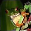 הצפרדע האדישה