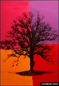 Prints of Rabbi Yitzchok Moulley's Tree of Life are a major seller at the ArtisZen Arts gallery in Lambertville, N.J.