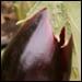 Eggplant Roulade