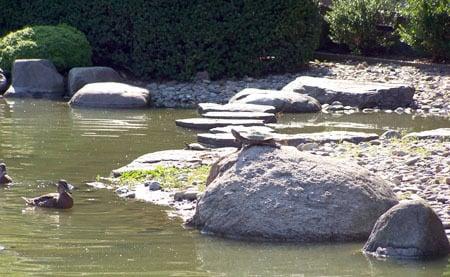The lake in Botanical Gardens (Photo: Freida Glassner)