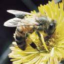 Honey Bee Workshop