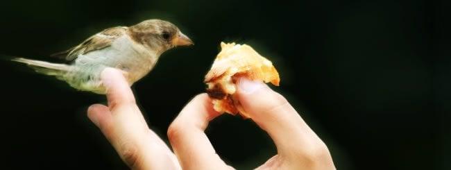 Video de la Parashá: Obligación Bíblica de Darle de Comer a las Mascotas