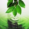 Torá - A Primeira Legislação Ecológica do Mundo