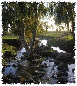 Photo of nature in Moshav Keshet, taken by author of this article, resident of the Moshav