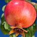 The Third Pomegranate