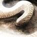 Il Tuo Serpente
