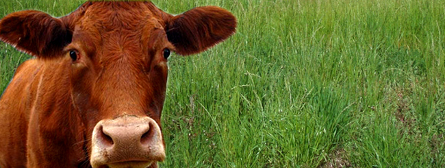 Weekly Torah Reading - The Holy Ari: The 5 Strengths of the Red Cow