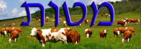 Daily Zohar - Matot
