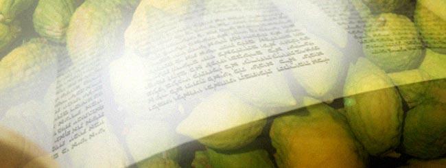 Torah Portion: Sukkot