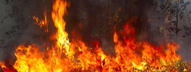 Comentaristas de la Parashá: ¡Fuego!