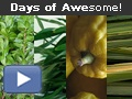 Video: Days of AWEsome!