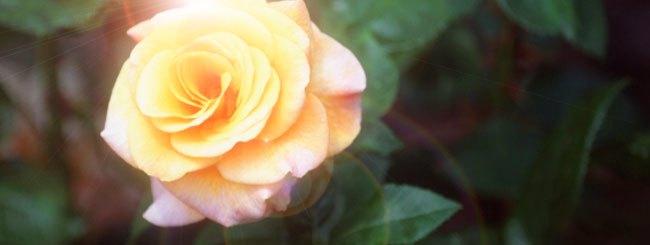 Toledòt: Rivkà, una Rosa tra le Spine