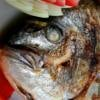 Come mai è usanza mangiare pesce di Shabbàt?