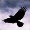O Cair das Aves