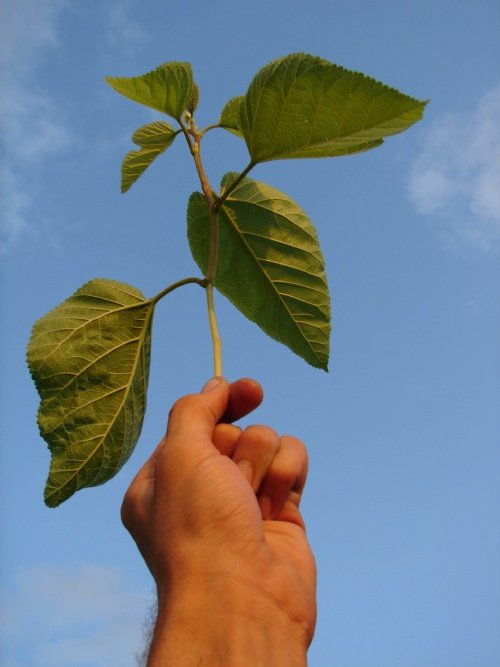 hand with leaves.jpg