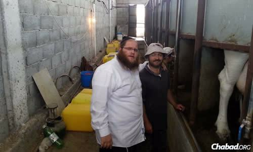 Rabbi Chaim Hillel Azimov of Northern Cyprus has prepared a special batch of cheese and other dairy items for this week's holiday of Shavuot.