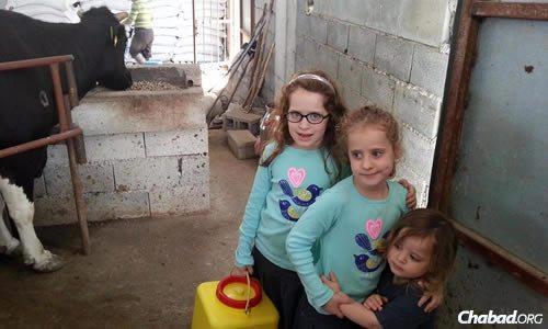 The Azimov children—Chana Miriam, Chaya Mushka and Menachem Mendel—know their way around livestock on the sun-drenched island where they live.
