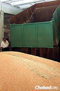 Ashkenazi watches as the wheat kernels are unloaded. (Photo: DJC.com.ua)