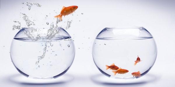 fish-jumping-out-of-bowl.jpg