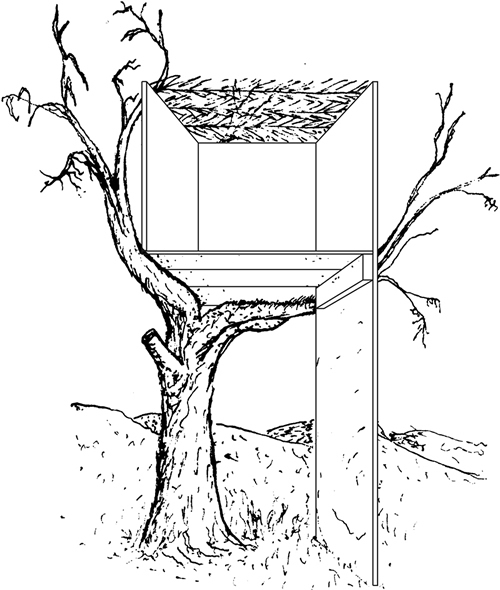 Fig. 12: See sec. 628:9. As evident from this diagram, the leaves of a tree on which a sukkah was built should not cover the s'chach.