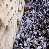 Jerusalém: A Alma de Israel